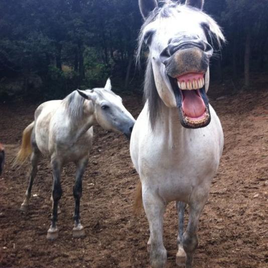 caballos granja morgovejo
