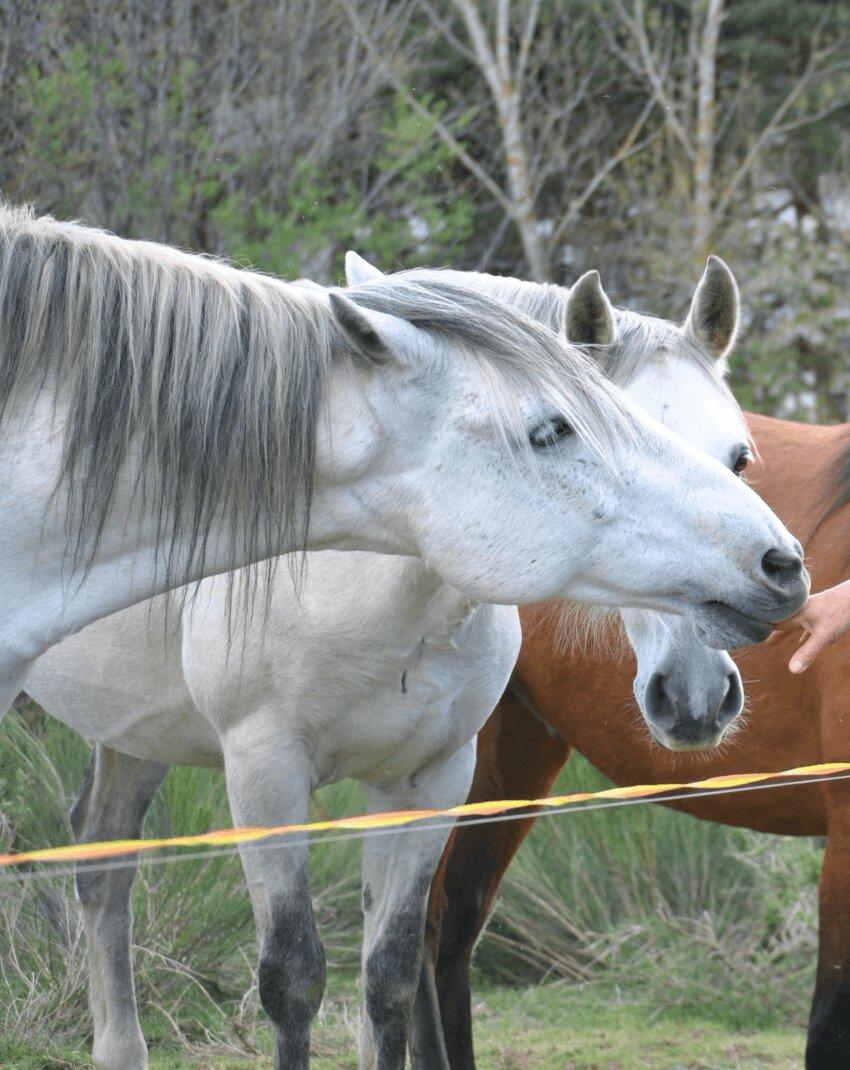 caballos de volteo